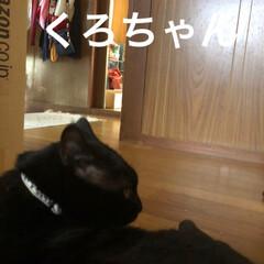 黒猫/にゃんこ同好会 まだ少し早いけど私が夕飯の準備してたから…