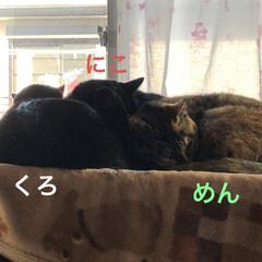 家族/黒猫/猫/寝姿/親子/リミアの冬暮らし 朝ごはん食べて私は通院に行くので一休憩。…
