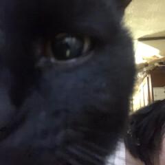 誕生日フォト/黒猫/くろママ 今日はくろママがお家に入った日。たまたま…(3枚目)