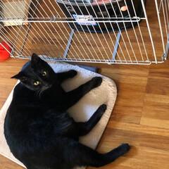 黒猫/猫/にゃんこ同好会 今朝は冷えましたね❣️なので朝からストー…