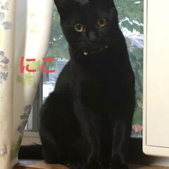 黒猫/にゃんこ同好会 3匹3様おもしろいですね🤣(2枚目)