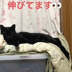 黒猫/きょうだい なんとか体調が落ち着いてきて早々とお風呂…