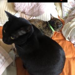 親子/黒猫/猫 動いては休みを繰り返しとりあえず休憩して…