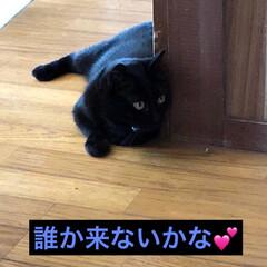 猫派/にゃんこ同好会 暑いですね〜💦体調が悪くてごろごろしてる…