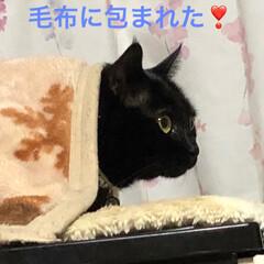 黒猫 くろの表情が可愛く撮れて大満足な かあた…