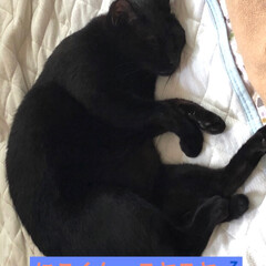 黒猫/にゃんこ同好会/うちの子自慢 連投失礼します🙇♀️ なんか今日は隙を…