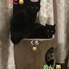 猫/黒猫/家族 すごく珍しいショットが撮れました。 切り…