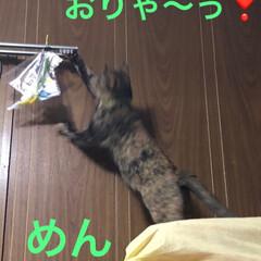 黒猫/にゃんこ同好会 3匹3様おもしろいですね🤣(3枚目)