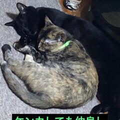 猫派/にゃんこ同好会 昨夜、夜中目が覚めて猫様は何処に?と探す…