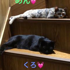 黒猫/猫派/にゃんこ同好会/うちの子ベストショット 良く寝てます。寝方が親子シンクロしてる🥰…