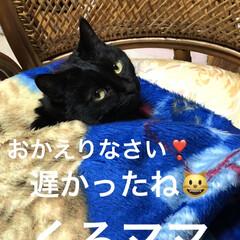 黒猫/くろママ 病院から帰ると毛布にくるまれたくろママを…