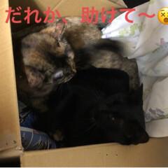 黒猫/にゃんこ同好会 夜のひと時それぞれ好きな場所で寝てたのに…(6枚目)