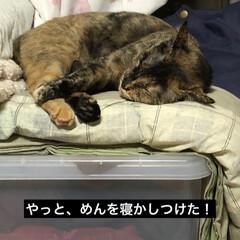 親子/にゃんこ同好会 何とかめんを寝かしつけて、そーとそーと移…