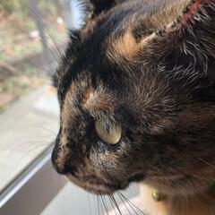 予防接種/黒猫/猫/仲良し 今日、わちは病院に連れて行かれた🙀 予防…