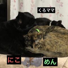家族/猫/黒猫/リミアの冬暮らし くろママは今寝室の衣装ケースの上が1番く…