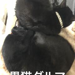 寝姿/親子/黒猫 くろママとにこが丸まってくっついたらダル…
