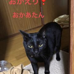 会話/表情/黒猫/猫 今日は朝から父の病院への通院へ。バス電車…