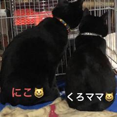 ストーブ/親子/黒猫 朝ごはんを食べたらめんは寝室の定位置に寝…