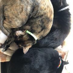 家族/黒猫/猫/寝姿 仲良く家族でおねんね。どんなにケンカして…