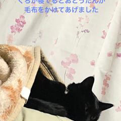 黒猫/猫/親子/暮らし 猫様劇場、はじまりはじまり。 くろに毛布…