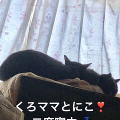 親子/寝姿/仲良し/黒猫 おはようございます😊うちの猫様は 朝ごは…