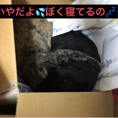 黒猫/にゃんこ同好会 夜のひと時それぞれ好きな場所で寝てたのに…(3枚目)