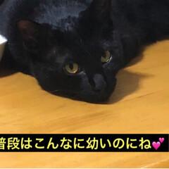 黒猫/にゃんこ同好会 あれ〜猫様はーと探すといつもにこがいる箱…(2枚目)