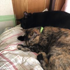 黒猫/にゃんこ同好会 朝から家の中を嵐のように飛び回り転げ回っ…