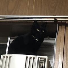黒猫/にゃんこ同好会 今日は気圧のせいか起き上がることができず…