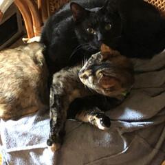 黒猫/猫/にゃんこ同好会/わたしのお気に入り 今朝は早朝から猫様たち大騒ぎ❣️そのうち…