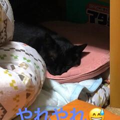 黒猫/にゃんこ同好会 またしてもめんが夕飯のおかずをつまみ喰い…(1枚目)