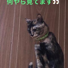あくび猫/表情/猫 めんはとってもわかりやすい子。 めまぐる…