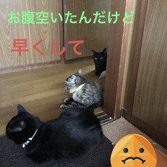 黒猫/にゃんこ同好会 3匹揃ってお目見えです。 イチジクのジャ…