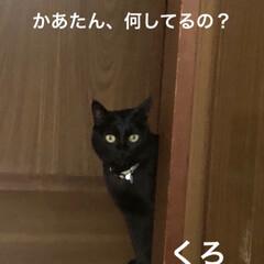 黒猫/にゃんこ同好会 3匹3様おもしろいですね🤣