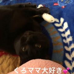 お気に入りおもちゃ/親子/猫/黒猫 くろがお気に入りのチンアナゴ。本当は名古…