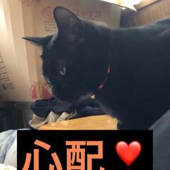 黒猫/にゃんこ同好会 皆さまお元気にお過ごしの様子。私は体調不…(4枚目)