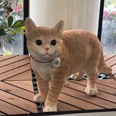 おすすめアイテム/にゃんこ同好会 今日は猫砂を買いにホームセンターへ行って…