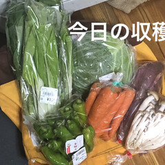 新鮮野菜/節約 地場産のお野菜を買いに行ってきました!さ…