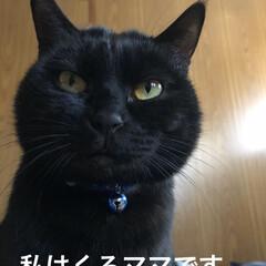 親子/黒猫/猫 そういえば出会った頃のくろママの写真載せ…