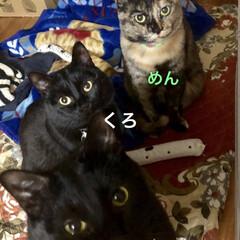 家族/猫/黒猫 今朝も朝からパワフルなうちの猫様😺3匹揃…