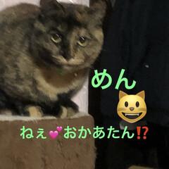 くろ/にこ/黒猫/猫/めん/新生活/... おはようございます😃 朝から猫様もごはん…(5枚目)