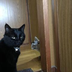 黒猫 家に帰って疲れて横になってたらねこたちが…