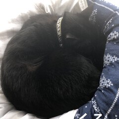 黒猫/にこ/くろママ/めん/猫/暮らし 同居する次女と末娘と旦那さん4人で焼き肉…