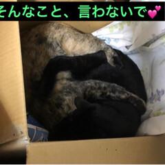 黒猫/にゃんこ同好会 夜のひと時それぞれ好きな場所で寝てたのに…(4枚目)