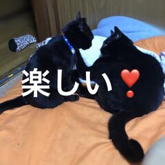 黒猫/にゃんこ同好会 昨日はおとなしかった猫さま。今日は私が動…