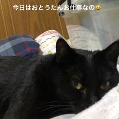 家族/黒猫/暮らし 旦那さんの夜勤の日何故か猫様方が おとう…