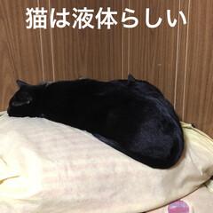 黒猫 にこは体格のが大きい。太ってるというより…