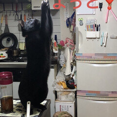 にこ/黒猫/猫/limiaキッチン同好会/キッチン/暮らし なんか、しだしたなぁとみにいくとにこが …(4枚目)