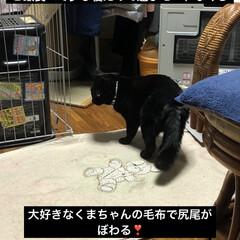 遊び/くろママ/黒猫 すっかりお家での生活にも慣れて遊んだりで…