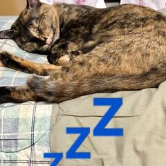 寝顔/家族/黒猫/暮らし 夕飯食べたら一眠り💤夜会の為に体力温存で…